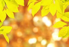 Frame of leaf yellow color Stock Photography