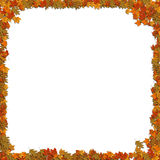Frame of leafs Stock Images