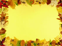 Frame of leafs II royalty free stock photography