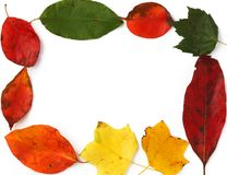 Frame from leaves. Frame from autumn leaves stock images