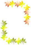 Frame of leaves. Picturesque frame of maple leaves Stock Images