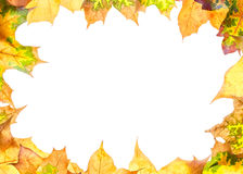 Frame with leaves Stock Image