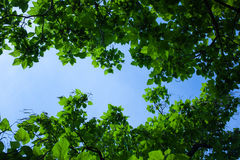 Frame of leaves around blue sky Stock Photo