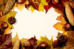 Frame of leaves Royalty Free Stock Photography