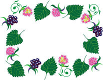 Frame from leaves and berry. Frame from leaves and berryon the white background Royalty Free Stock Image