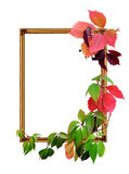 Frame and leaves Royalty Free Stock Photo