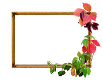 Frame and leaves Royalty Free Stock Image