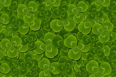 Frame leaves clover trefoil shamrock  pattern Stock Images