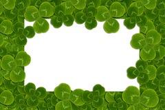 Frame leaves clover trefoil shamrock  pattern Stock Photography