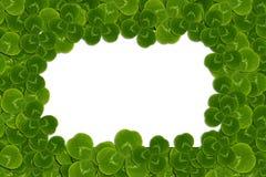 Frame leaves clover trefoil shamrock  pattern Stock Photos
