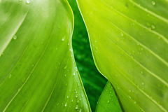 Frame  leaves  with dew drops Stock Images