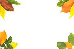 Frame from leaves Royalty Free Stock Photos