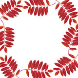 Frame from leaves and mountain ash Royalty Free Stock Photo