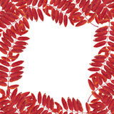 Frame from leaves and mountain ash Stock Images