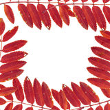 Frame from leaves and mountain ash Stock Photography