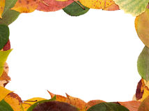 Frame from leaves Stock Photography