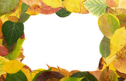 Frame from leaves Royalty Free Stock Images
