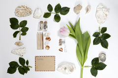 Frame from the leaves of roses and shells on white background. Memory of summer Royalty Free Stock Images
