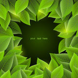 Frame with leaves, vector. Green foliage on a dark backgrou Stock Images