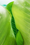 Frame  leaves  with water rain drops Royalty Free Stock Images