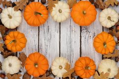 Frame of leaves, white and orange pumpkins over white wood. Autumn frame of leaves and white and orange pumpkins over a rustic white wood background Royalty Free Stock Image