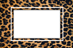 Frame with a leopard pattern. With  white background Stock Photo