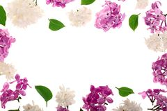 Frame with lilac flowers and leaves isolated on white background with copy space for your text. Flat lay. Top view vector illustration