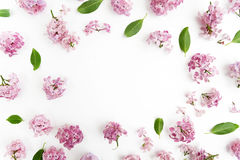 Frame with lilac flowers and leaves on white background. flat lay, overhead view. Frame with lilac flowers and leaves on white background. flat lay stock image