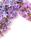 Frame of lilac isolated on white Stock Photo