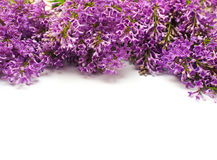 Frame of lilac twigs on white background and space for text Stock Images