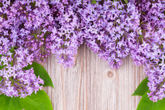 Frame of lilas Stock Photography