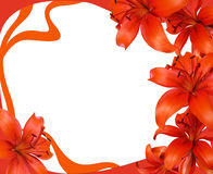 Frame with Lily Stock Photos