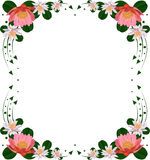 Frame with lily flowers Stock Photos