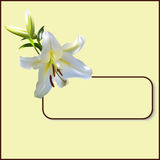 Frame with lily Royalty Free Stock Image