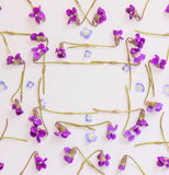 The frame of the little blue petals and forest flowers purple violets on white background with space for text Royalty Free Stock Photo