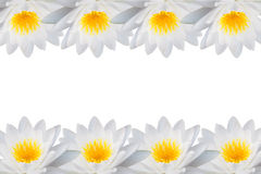 The frame of the Lotus flowers. Frame of the Lotus flowers Royalty Free Stock Photos