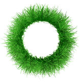 Frame the lush green grass Stock Image