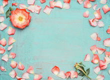 Frame made ​​out of pink pale rose petals on blue turquoise background, top view. Stock Images