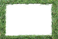 Frame made of fir needles Royalty Free Stock Photo