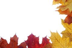 Frame made of autumn leaves Stock Image
