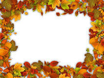 Frame made of autumn leaves. Stock Photos
