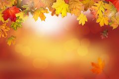 A frame made with autumn leaves royalty free stock images
