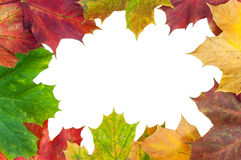 Frame made of autumn maple leaves Royalty Free Stock Images