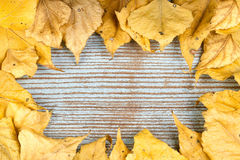 A frame made of autumn yellow leaves Stock Images