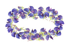 Frame made of beautiful lupine flower petals. On white background stock photography