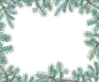 Frame made with blue spruce twigs Royalty Free Stock Photos