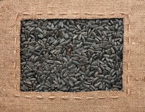 Frame made of burlap with the line lies on sunflower seeds Stock Photos