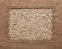 Frame made of burlap with the line lies on sunflower seeds Stock Photography