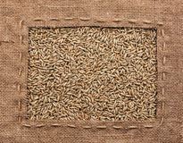 Frame made of burlap with rye Royalty Free Stock Photography