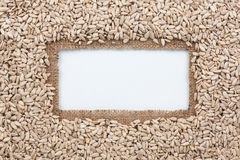 Frame made of burlap and sunflower seeds lies on white background Stock Photos